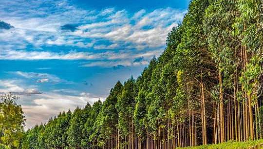 Skandalen av Calling Plantations Forest Restoration sätter klimatmålen i fara
