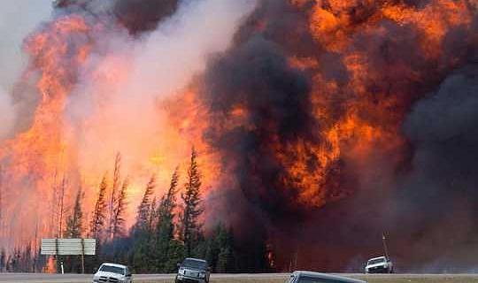 Как бороться с лесными пожарами и изменением климата с водно-болотными угодьями