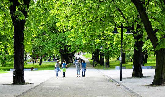 Как деревья могут реально охладить наши города?