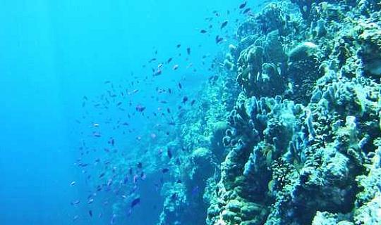 Эта стратегия может быть лучше, чтобы спасти кораллы от изменения климата