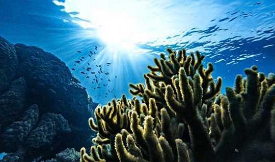 Поглощающие свойства CO2 компании Ocean со временем меняются