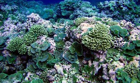 Биоразнообразие помогает коралловым рифам процветать - и может стать частью стратегии их спасения