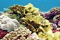 Refugee Corals Move To Escape Warming Seas