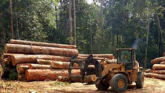 歐盟如何能夠停止在亞馬遜地區造成破壞