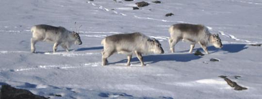 انباشت بارش برف در دریای قطب شمال یخ همچنان ادامه دارد