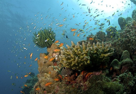 산호초 4