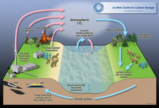 declining carbon sink2