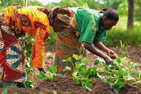 چرا باغچه های آفریقایی برای کمبود مواد غذایی سر و کار دارند