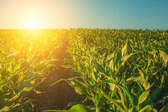 کیا بڑھتی ہوئی کاربن ڈائی آکسائیڈ سطح واقعی پودوں کی ترقی کو بڑھانا؟