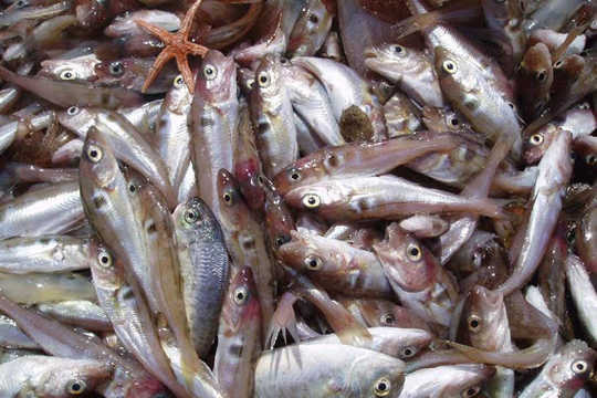 Climate Change Is Cutting Into the Global Fish Catch, and It's on Pace to Get Worse