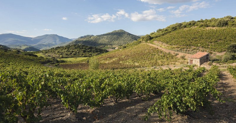 French wines show hot dry years are now normal