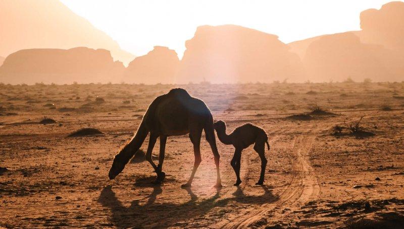 پیمان صحرا مبارزه برای سرزمین های تخریب شده را افزایش می دهد