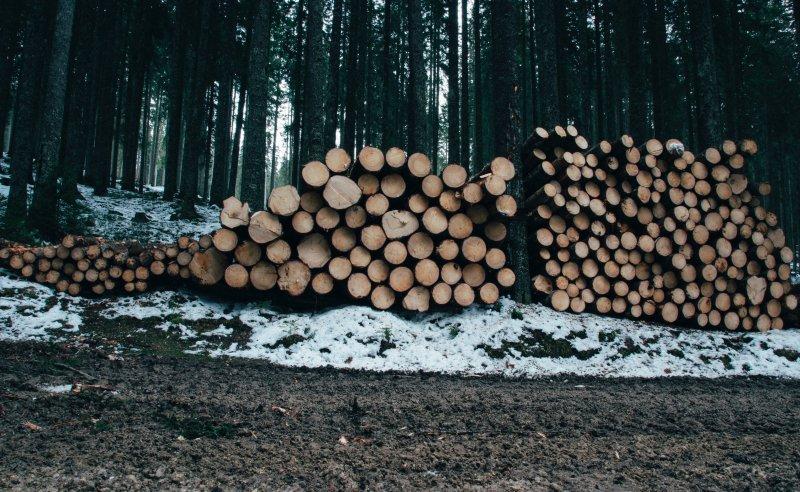森林破坏造成的损失远远超出了预期