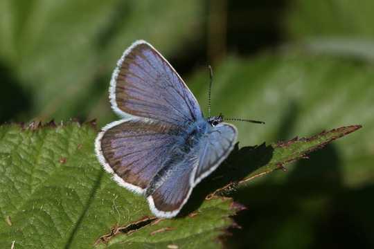 Sommige vlinders en motte kan nie by die veranderende klimaat aanpas nie