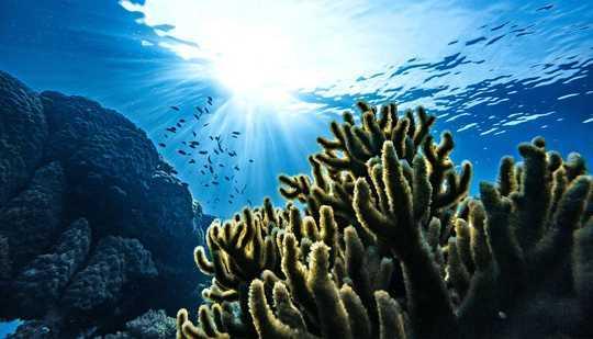 Ocean's CO2 Emici Güçler Zamanla Değişiyor
