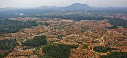 Habitatverlies beïnvloed nie net soorte nie, dit beïnvloed netwerke van ekologiese verhoudings
