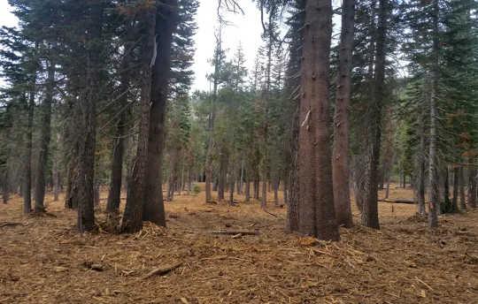 कैलिफोर्निया के जंगलों को कम करने के लिए जंगल की आग के जोखिम को कम करने में लगेंगे समय, अरबों डॉलर और व्यापक प्रतिबद्धता
