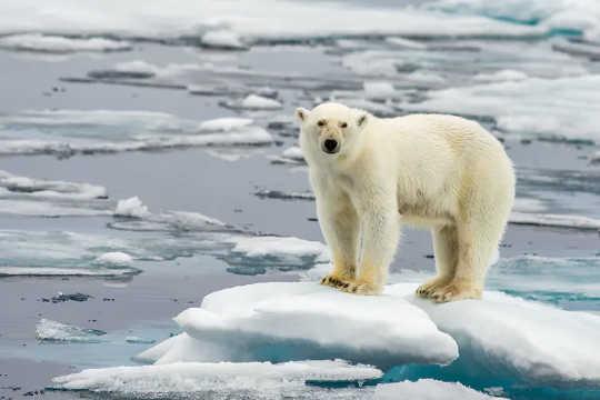 क्लासिक जलवायु परिवर्तन छवियों में से एक। क्यों समाचार आउटलेट अभी भी खतरनाक और पुराने जलवायु विचारों को एक मंच दे रहे हैं)