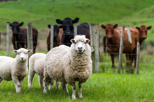เกิดอะไรขึ้นถ้าเราเอาสัตว์เลี้ยงในฟาร์มทั้งหมดออกจากแผ่นดินและปลูกพืชและต้นไม้แทน?
