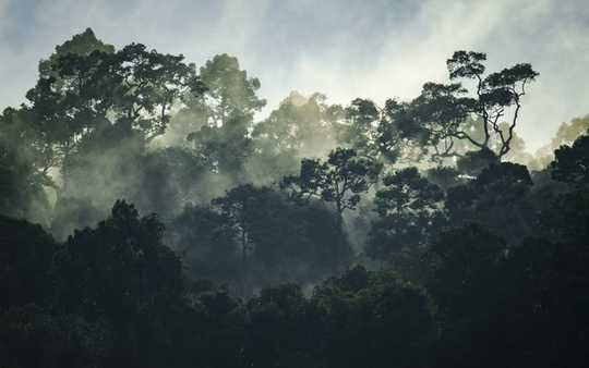 Why Rainforests Are Losing Their Power To Help Humanity