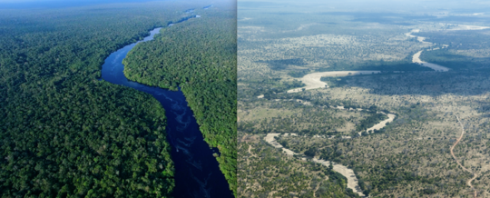 Huge Ecosystems Could Collapse In Less Than 50 Years