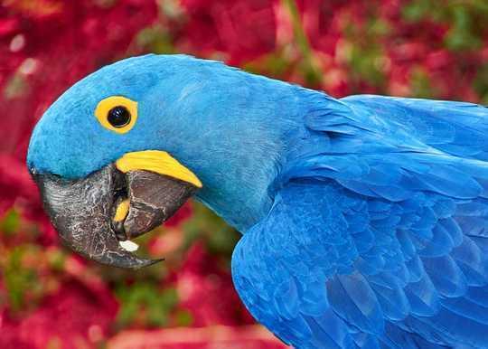 A madárfajok a kihaláshoz százszor gyorsabban néznek szembe, mint azt korábban gondolták