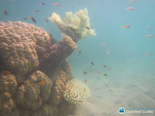 من آنچه را که برای صخره کردن ماهی ها بعد از سفید شدن مرجان ها اتفاق می افتد را مطالعه کردم. چیزی که من هنوز دیدم باعث تهوع می شود