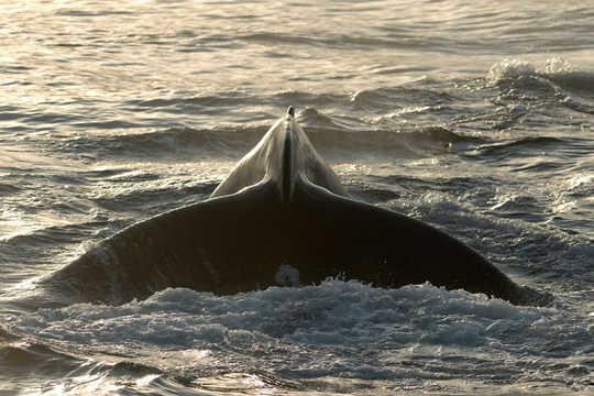 Comment l'atlantification rend l'océan Arctique plus salé et plus chaud