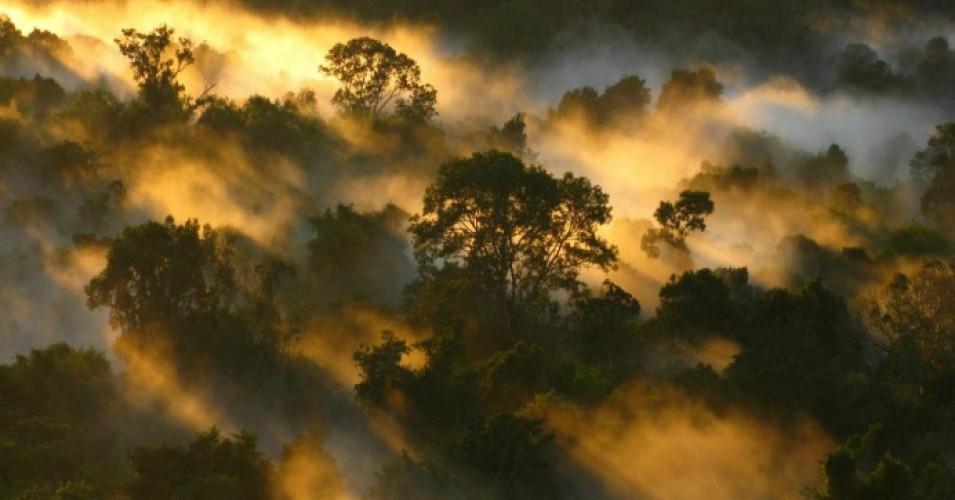 从碳海绵向碳源转变的热带森林