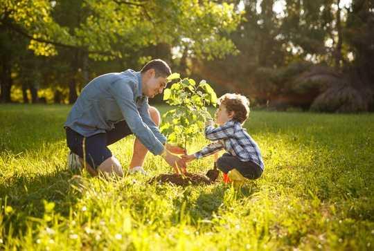 Íme 5 gyakorlati út, ahogyan a fák segíthetnek megélni az éghajlatváltozást