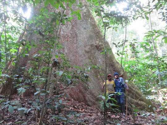מצאנו 2˚C של התחממות ידחוף את יערות הגשם הטרופיות ביותר מעל סף החום הבטוח שלהם