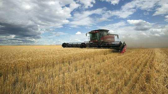 Зміна клімату зупинила урожайність австралійської пшениці