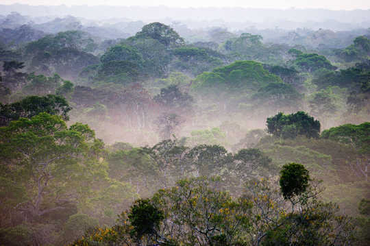 Could Climate Change And Deforestation Spark Amazon Dieback?