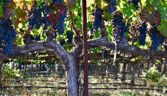 Climate Heat Means New Wine From Familiar Places