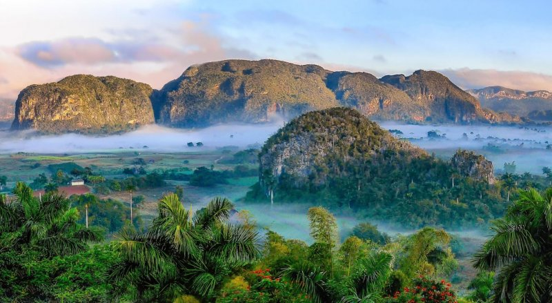 جنگل های طبیعی در ذخیره سازی کربن بهترین هستند