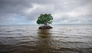 tengerszint emelkedése 4 12