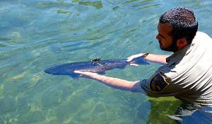 캘리포니아의 송어와 연어를 저장하는 6 방법