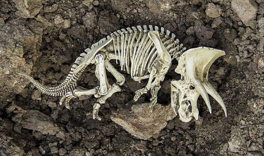 الانقراض هو عملية طبيعية ، لكنه يحدث في 1,000 مرات السرعة العادية