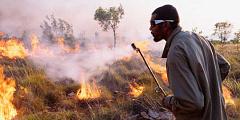 Bisakah Pengetahuan Pribumi Membantu Kami Mengelola Kebakaran Hutan?