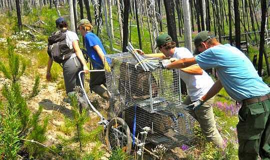 Nationell service för miljön - vad en armé av unga naturvårdare kunde uppnå