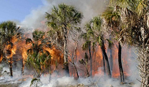 성장하는 작물에서 산림 규칙 복원