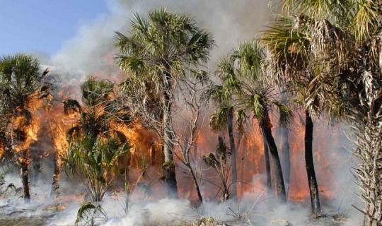 Återställande av skogar reglerar växande grödor
