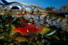 Mengapa Satwa Liar Air Tawar Menghadapi Masa Depan yang Tidak Pasti
