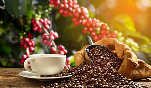 Miért vannak sötét napok a kávé előtt?