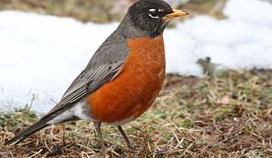 Hat jemand meinen guten Freund Robin gesehen? Kannst du mir sagen, wo er hin ist?