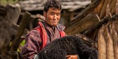 Dari Himalaya Ke Arktik, Para Penggembala Tradisional Berbagi Pengetahuan Untuk Mengatasi Iklim yang Berubah