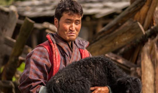 Från Himalaya till Arktis delar traditionella herdar kunskaper för att hantera ett förändrat klimat