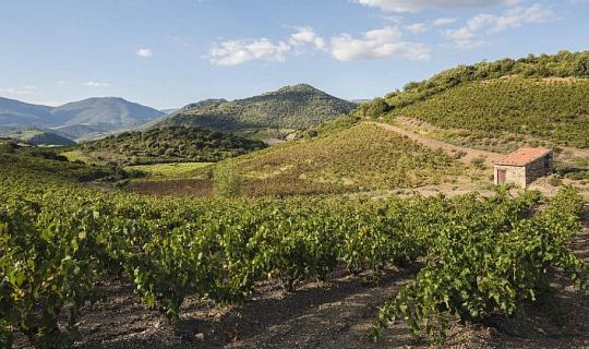 法國葡萄酒顯示炎熱乾燥的年份現在正常