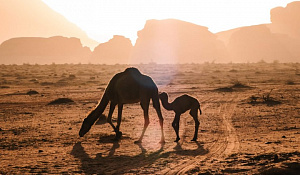 沙漠条约加强了对退化土地的斗争