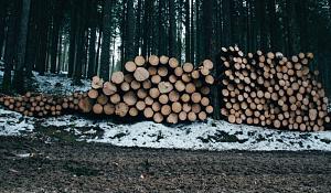 ค่าใช้จ่ายในการทำลายป่ามากกว่าที่คิด
